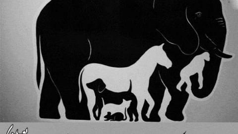 چند حیوان در تصویر می بینید؟