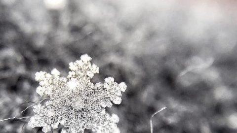 دانه های ریز و سفید برف