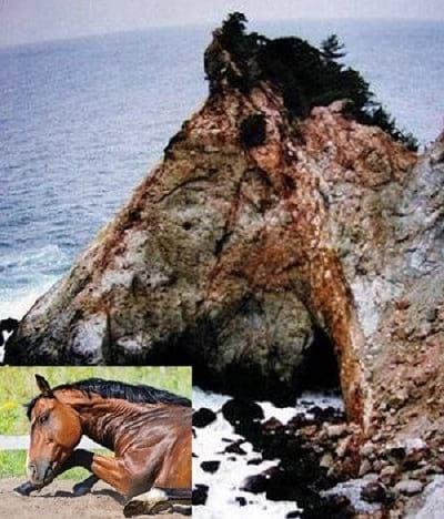 صخره هایی شبیه حیوانات (3)