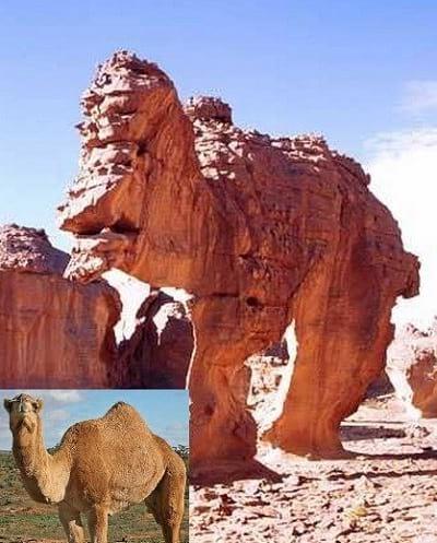 صخره هایی شبیه حیوانات (4)