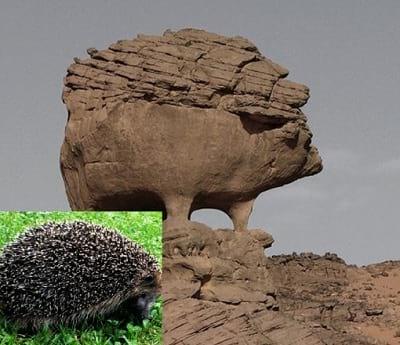 صخره هایی شبیه حیوانات (5)