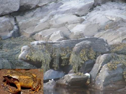 صخره هایی شبیه حیوانات (7)