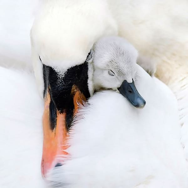 مهر مادری (2)