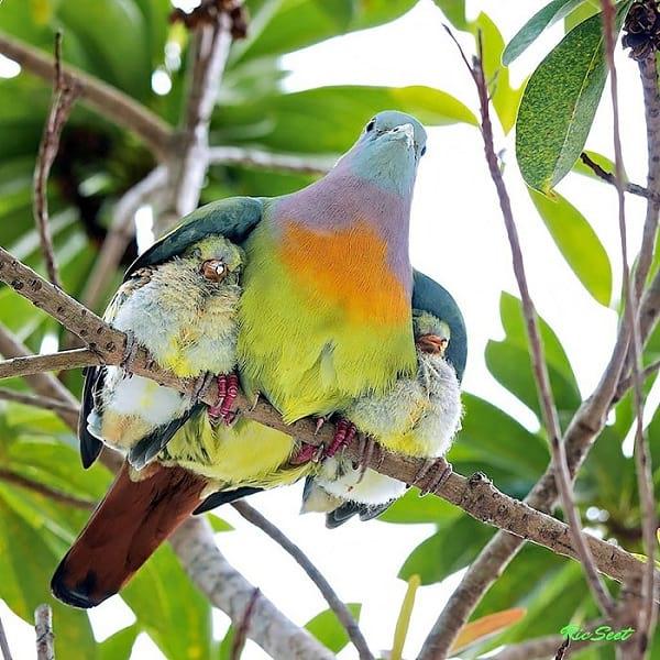 مهر مادری (3)