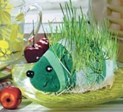 سبزه خارپشتی (1)