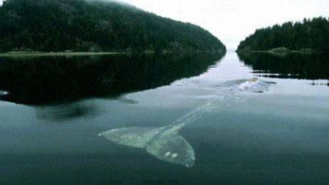 تنهاترین نهنگ جهان (ویدئو)