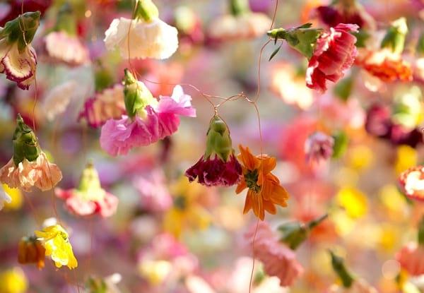 نمایشگاه گل (15)