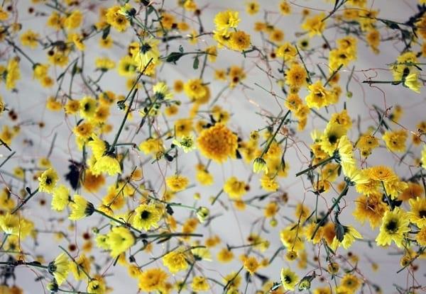 نمایشگاه گل (4)