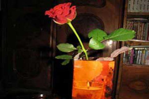 ازبطری نوشابه خانواده تا گلدانی زیبا