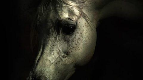 اسب های نجیب و دیدنی