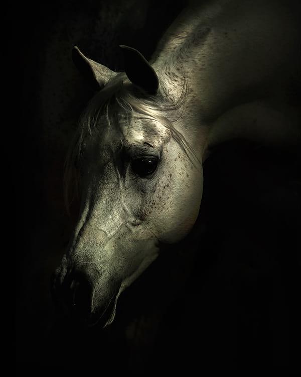 اسب های دیدنی (1)