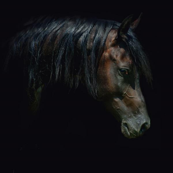 اسب های دیدنی (10)