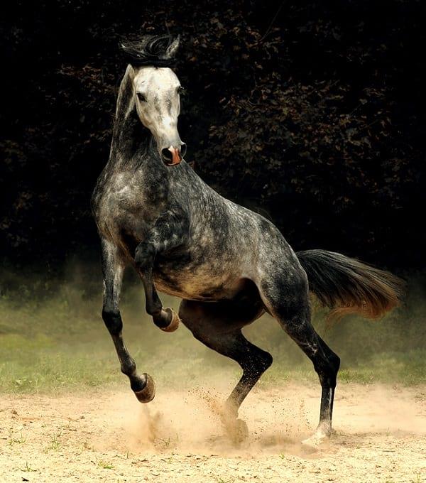 اسب های دیدنی (18)