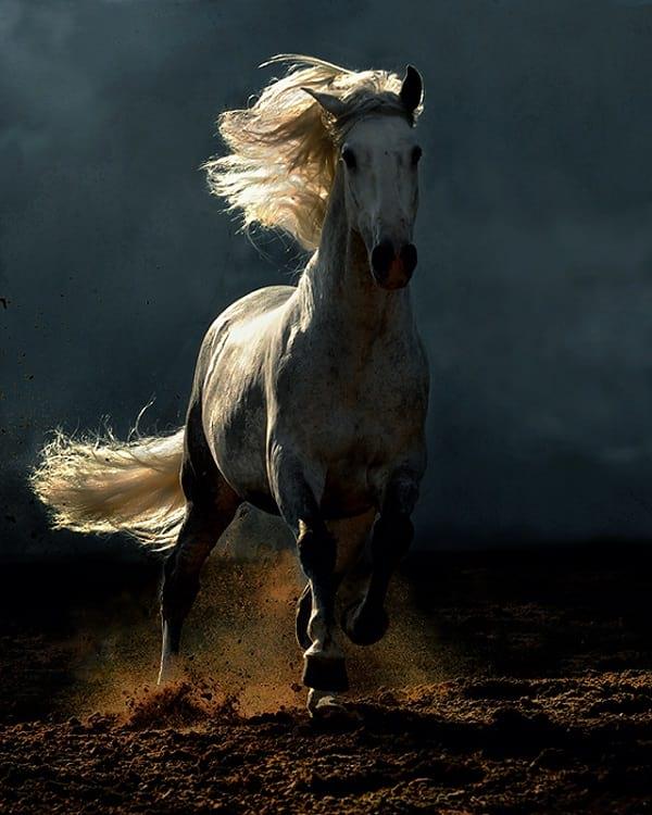 اسب های دیدنی (2)