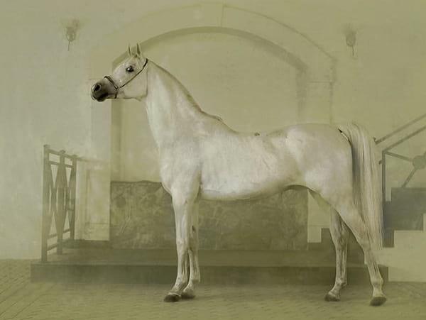 اسب های دیدنی (20)