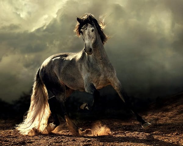 اسب های دیدنی (3)