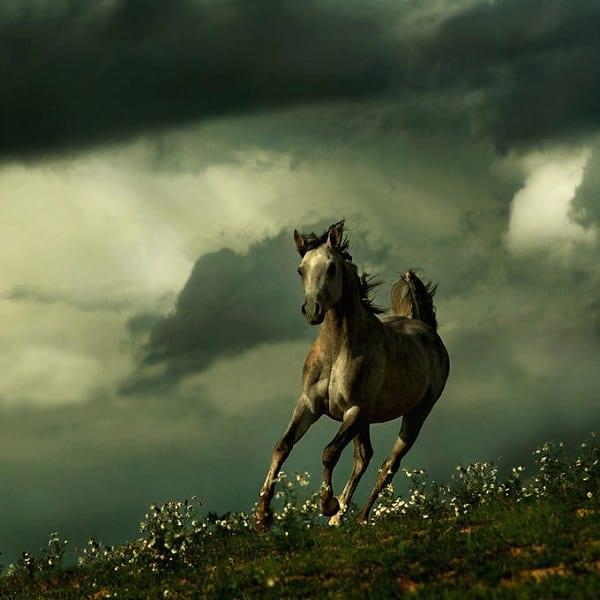 اسب های دیدنی (4)