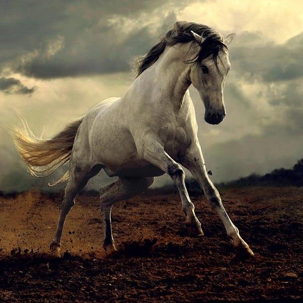 اسب های دیدنی (6)