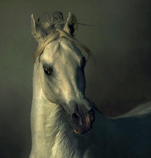 اسب های دیدنی (7)
