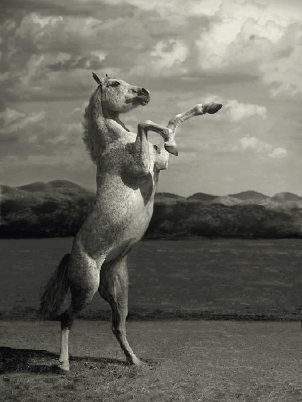 اسب های دیدنی (9)