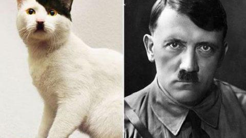 گربه هایی شبیه آدم ها