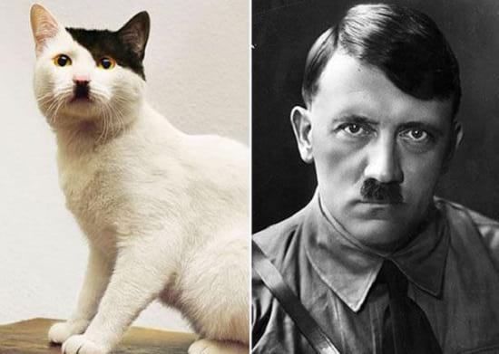 گربه هایی شبیه آدم ها (1)