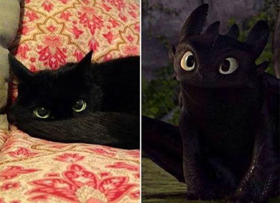 گربه هایی شبیه آدم ها (2)