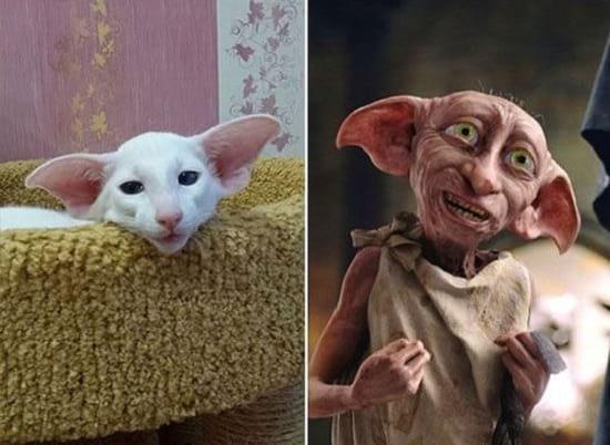 گربه هایی شبیه آدم ها (3)
