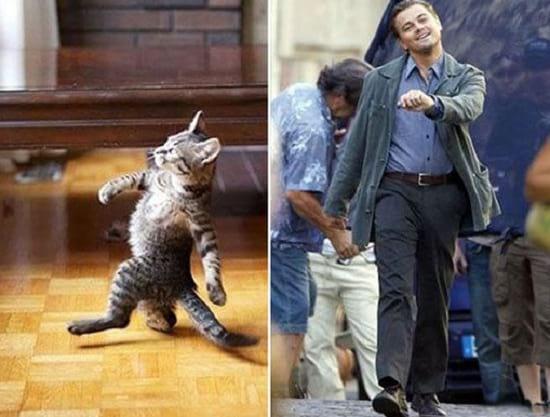 گربه هایی شبیه آدم ها (6)