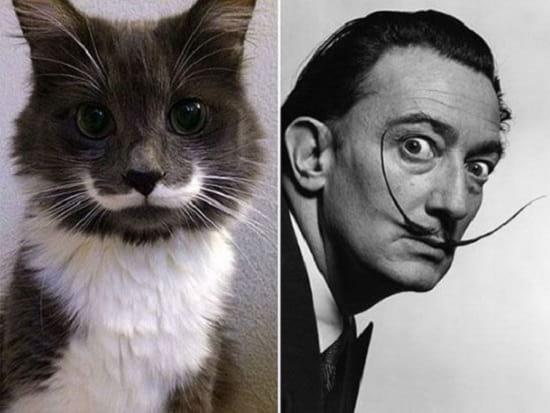 گربه هایی شبیه آدم ها (7)