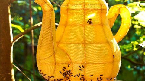زنبورهای هنرمند!