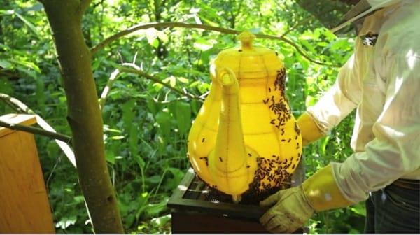 زنبورهای هنرمند (11)