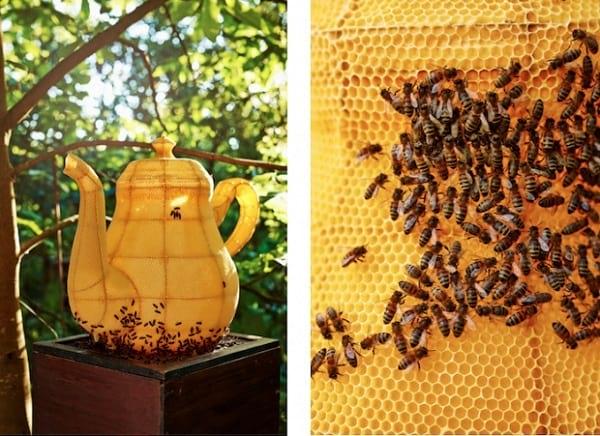 زنبورهای هنرمند (22)