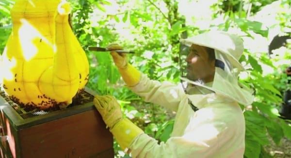 زنبورهای هنرمند (33)