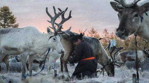 زندگی قبایل عشایری مغولستان با گوزن