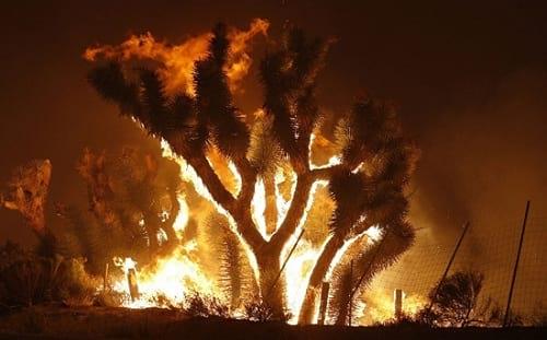 زیبایی آتش سوزی (13)