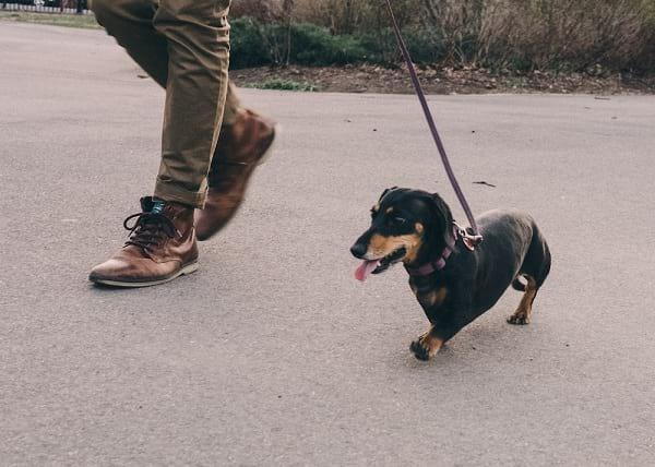 سگ غول پیکر (5)