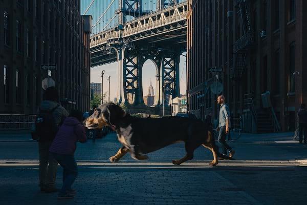 سگ غول پیکر (6)