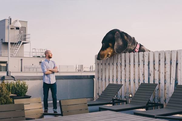 سگ غول پیکر (7)