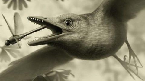 کشف فسیلی از بالهای یک پرنده!