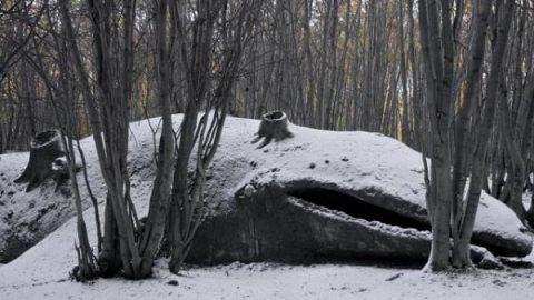 نهنگی در دل جنگل