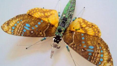 پروانه های رایانه ای