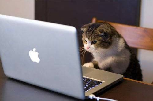 گربه های معتاد به فضای مجازی (10)