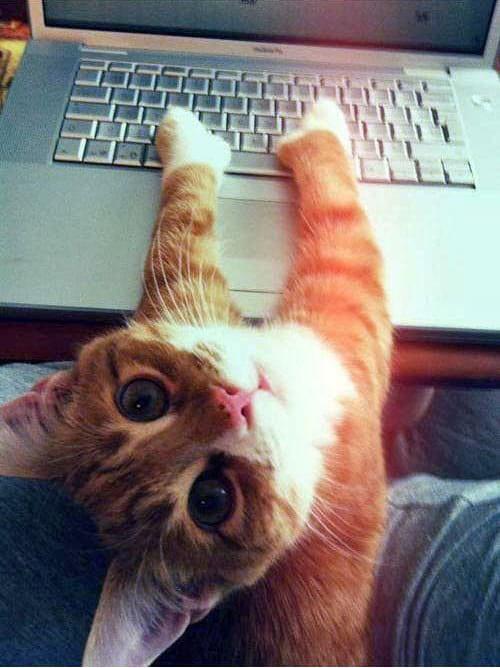 گربه های معتاد به فضای مجازی (11)
