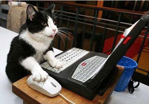 گربه های معتاد به فضای مجازی (2)