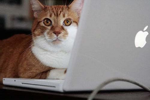 گربه های معتاد به فضای مجازی (3)