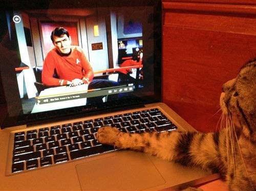 گربه های معتاد به فضای مجازی (4)