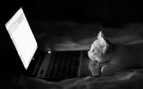 گربه های معتاد به فضای مجازی (5)