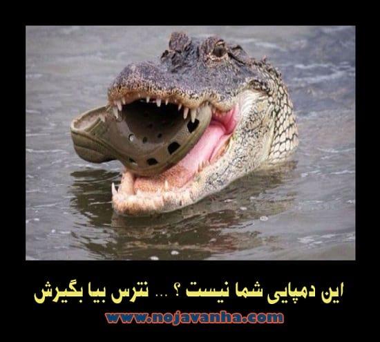 تصاویر طنز (1)