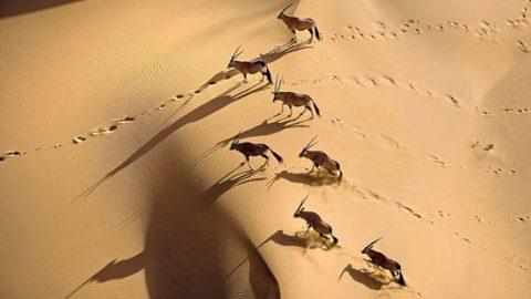حیات وحش آفریقا